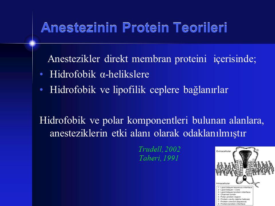 Anestezinin Protein Teorileri Anestezikler direkt membran proteini içerisinde; Hidrofobik α-helikslere Hidrofobik ve lipofilik ceplere bağlanırlar Hid