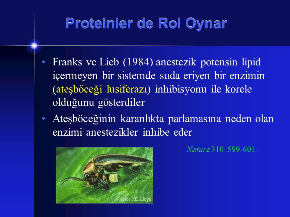Proteinler de Rol Oynar Franks ve Lieb (1984) anestezik potensin lipid içermeyen bir sistemde suda eriyen bir enzimin (ateşböceği lusiferazı) inhibisy