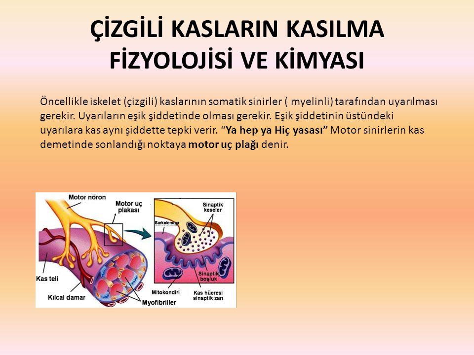 ÇİZGİLİ KASLARIN KASILMA FİZYOLOJİSİ VE KİMYASI Öncellikle iskelet (çizgili) kaslarının somatik sinirler ( myelinli) tarafından uyarılması gerekir. Uy