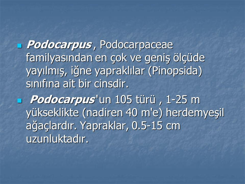 Podocarpus, Podocarpaceae familyasından en çok ve geniş ölçüde yayılmış, iğne yapraklılar (Pinopsida) sınıfına ait bir cinsdir.