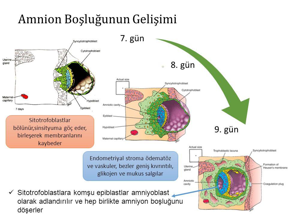 9.GÜN Blastokist endometriumum daha fazla gömülü Trofoblastik gelişim embriyonik kutupta daha belirgin Sinsityumda vakuoler yapılar Lakünar evre Hipoblast kökenli yassı hücrelerin oluşturduğu ince membran (Ekzokölomik membran-Heuser membranı) Ekzokölomik boşluk (primitif yolk kesesi)