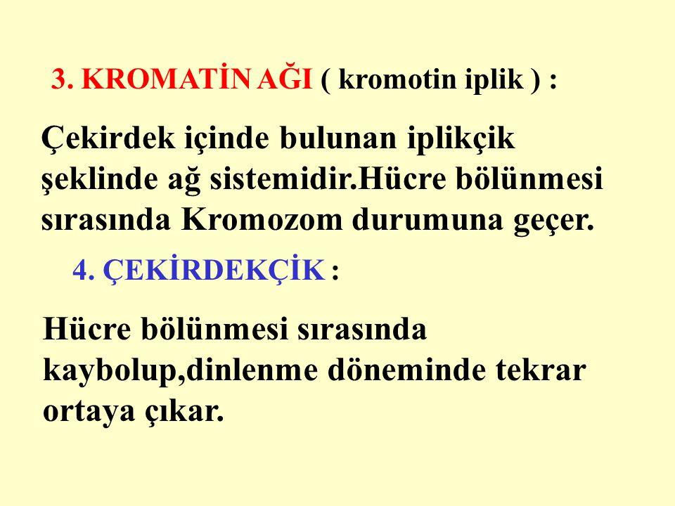3. KROMATİN AĞI ( kromotin iplik ) : 4.