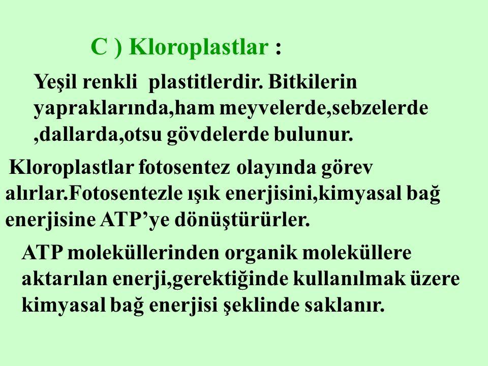 C ) Kloroplastlar : fotosentez olayında görev alırlar.Fotosentezle ışık enerjisini,kimyasal bağ enerjisine ATP'ye dönüştürürler.