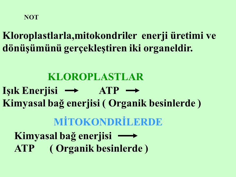 NOT Kloroplastlarla,mitokondriler enerji üretimi ve dönüşümünü gerçekleştiren iki organeldir.