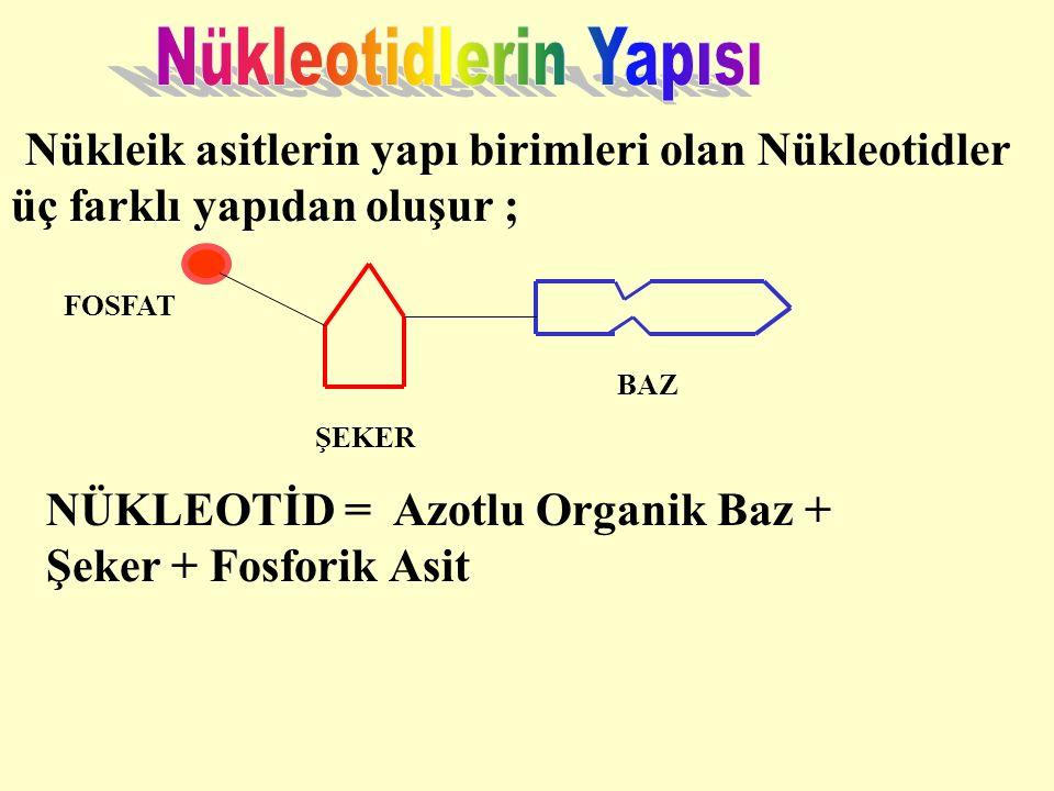 Nükleik asitlerin yapı birimleri olan Nükleotidler üç farklı yapıdan oluşur ; NÜKLEOTİD = Azotlu Organik Baz + Şeker + Fosforik Asit FOSFAT ŞEKER BAZ