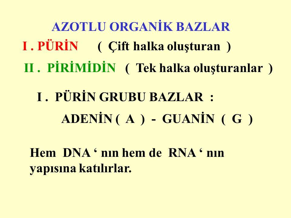 AZOTLU ORGANİK BAZLAR I. PÜRİN ( Çift halka oluşturan ) II.