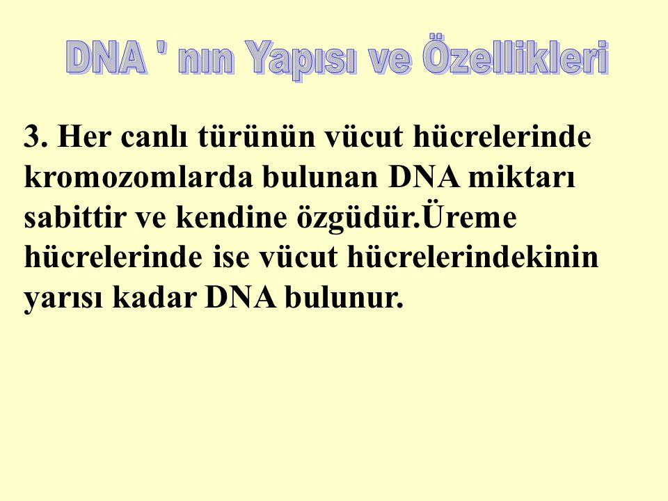 3. Her canlı türünün vücut hücrelerinde kromozomlarda bulunan DNA miktarı sabittir ve kendine özgüdür.Üreme hücrelerinde ise vücut hücrelerindekinin y