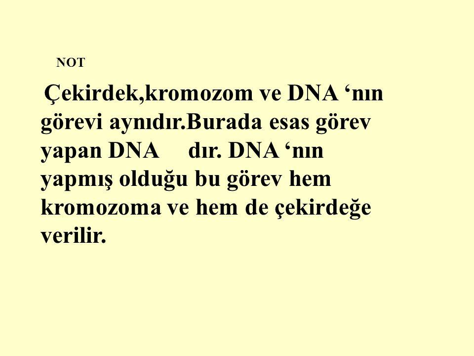 NOT Çekirdek,kromozom ve DNA 'nın görevi aynıdır.Burada esas görev yapan DNA dır.