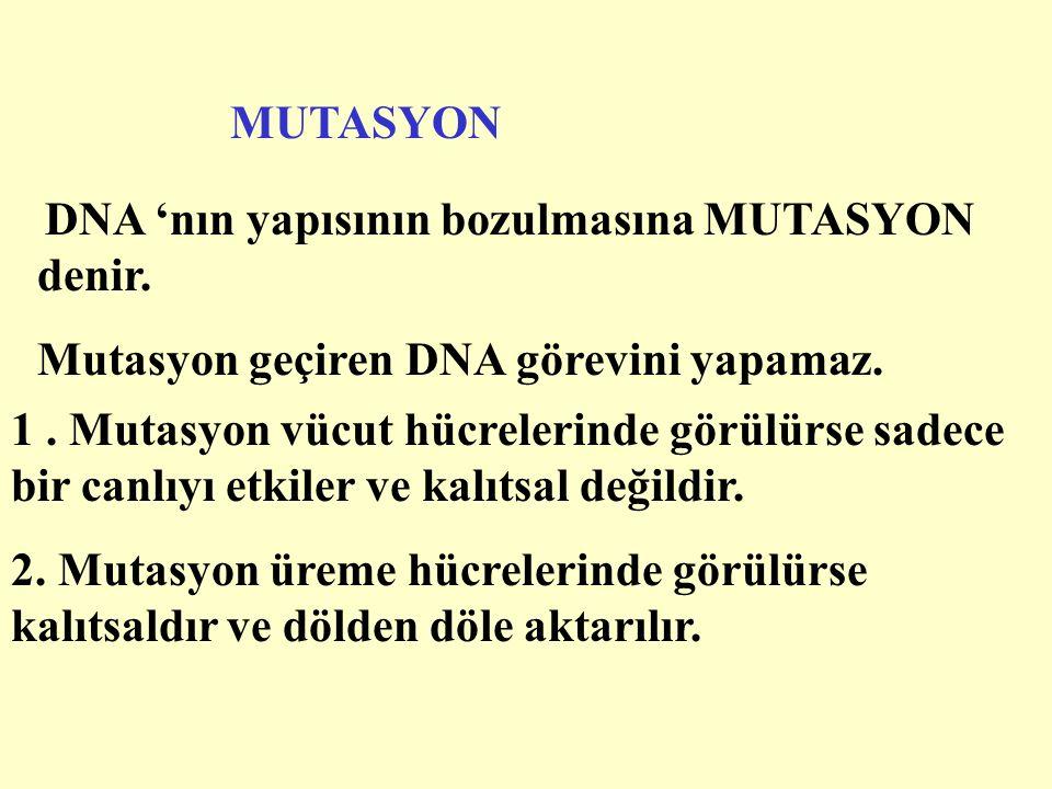 MUTASYON DNA 'nın yapısının bozulmasına MUTASYON denir.