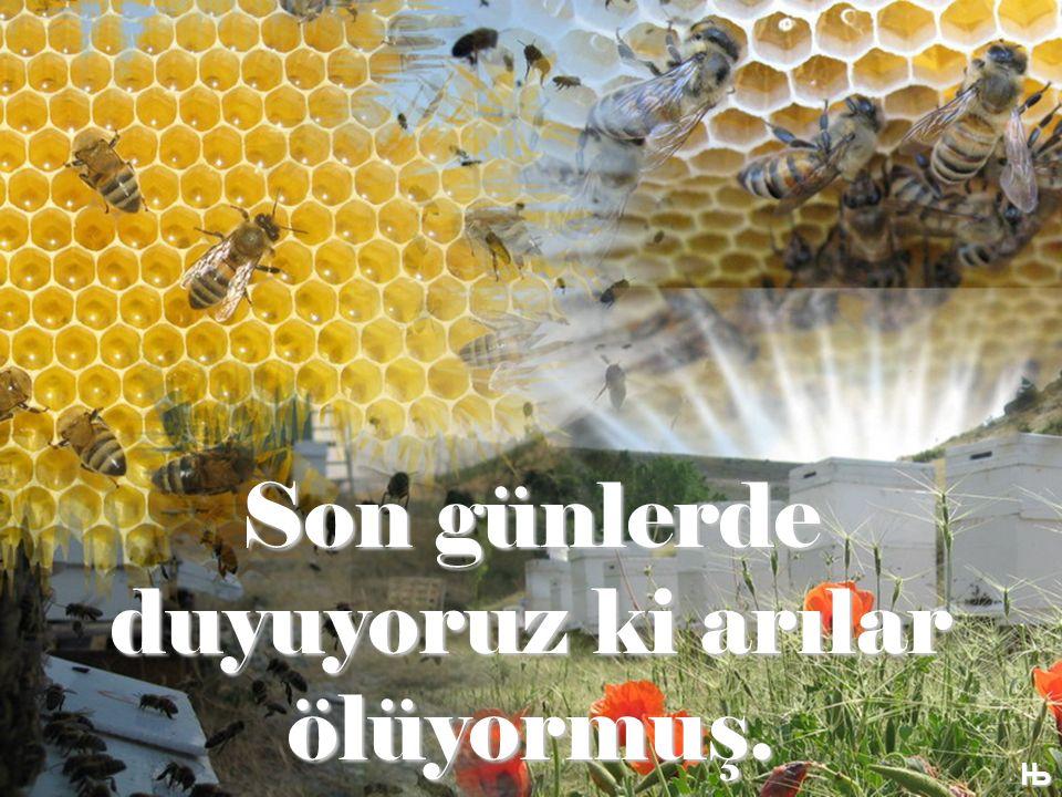 Son günlerde duyuyoruz ki arılar ölüyormuş. Њ