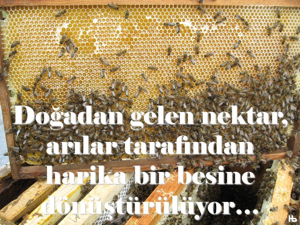 Doğadan gelen nektar, arılar tarafından harika bir besine dönüştürülüyor… Њ