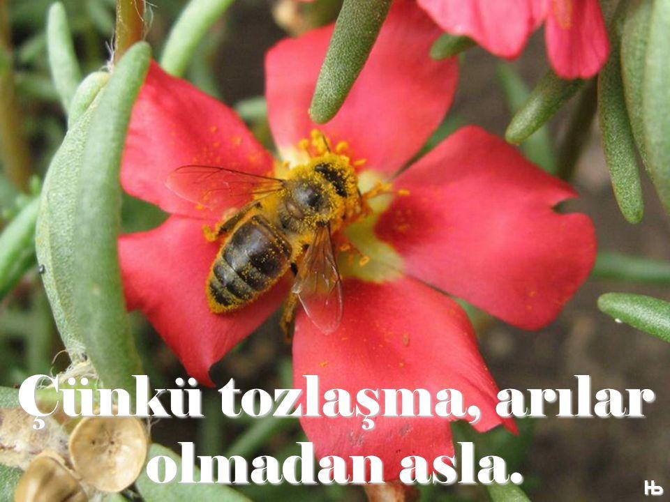 Çünkü tozlaşma, arılar olmadan asla. Њ