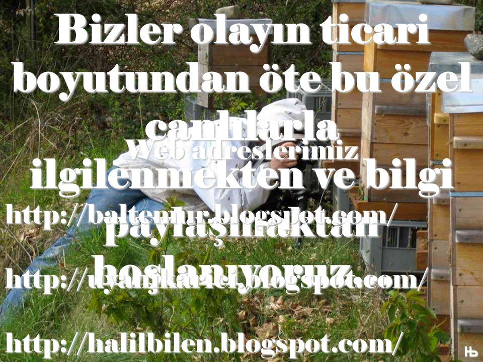 Bizler olayın ticari boyutundan öte bu özel canlılarla ilgilenmekten ve bilgi paylaşmaktan hoşlanıyoruz… Њ Web adreslerimiz http://baltemur.blogspot.com/http://uyanikarici.blogspot.com/http://halilbilen.blogspot.com/