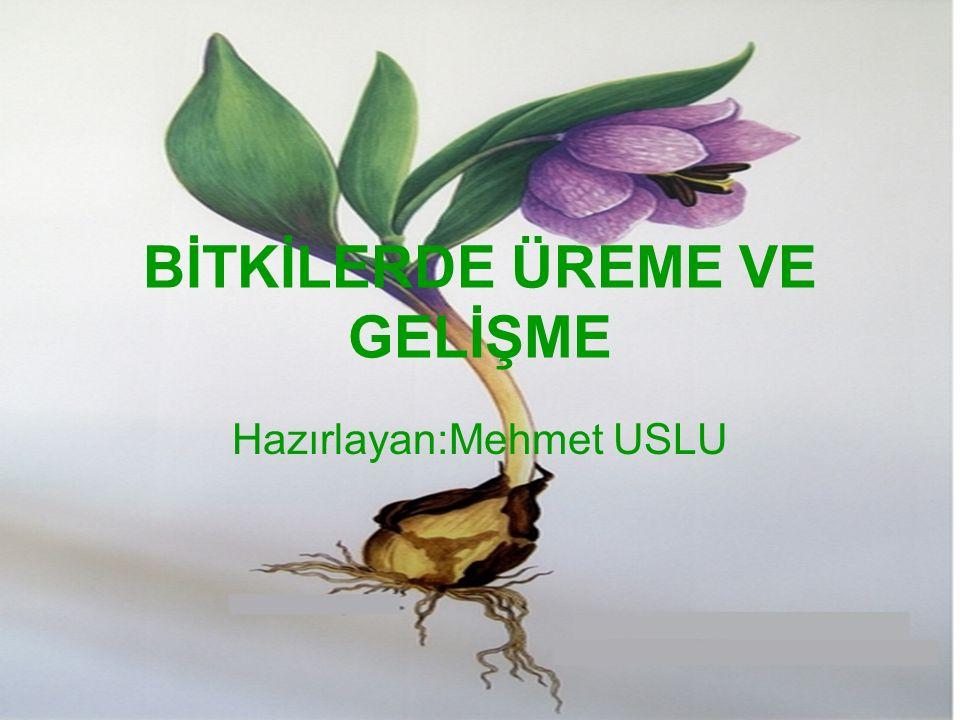 BİTKİLERDE ÜREME VE GELİŞME Hazırlayan:Mehmet USLU