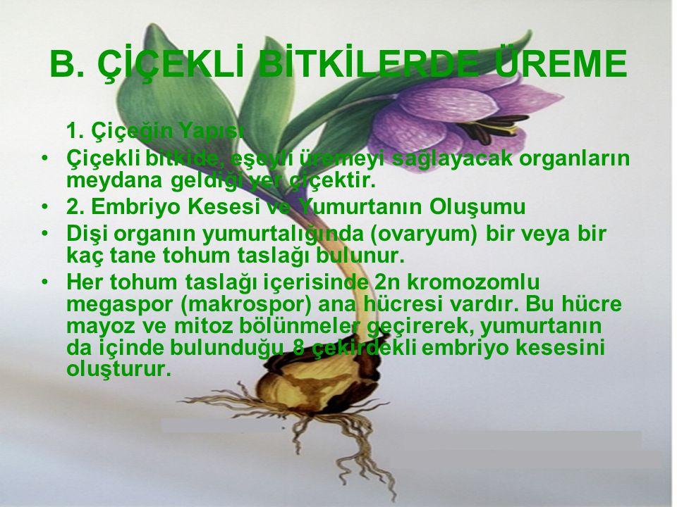 B. ÇİÇEKLİ BİTKİLERDE ÜREME 1. Çiçeğin Yapısı Çiçekli bitkide, eşeyli üremeyi sağlayacak organların meydana geldiği yer çiçektir. 2. Embriyo Kesesi ve