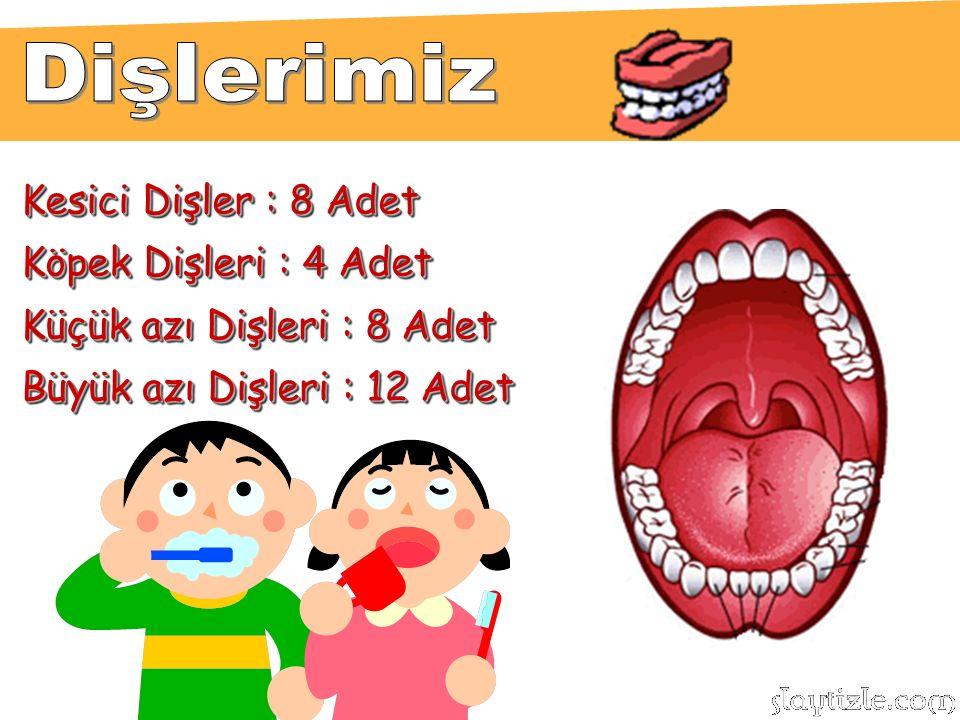 Kesici Dişler : 8 Adet Köpek Dişleri : 4 Adet Küçük azı Dişleri : 8 Adet Büyük azı Dişleri : 12 Adet Kesici Dişler : 8 Adet Köpek Dişleri : 4 Adet Küçük azı Dişleri : 8 Adet Büyük azı Dişleri : 12 Adet