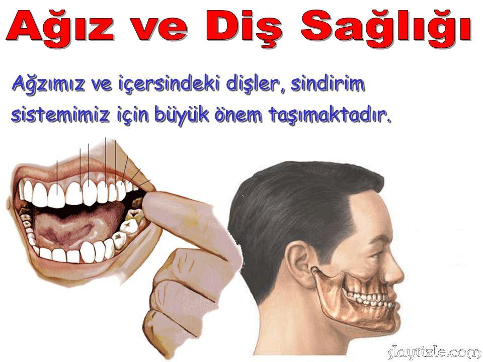 Ağzımız ve içersindeki dişler, sindirim sistemimiz için büyük önem taşımaktadır.