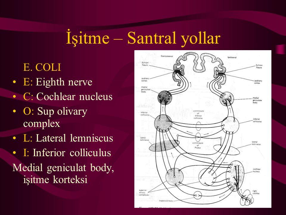 Genetik SNİK Otozomal dominant –Waardenburg sendromu –Treacher Collins sendromu –Stickler sendromu –Branchio-oto-renal sendrom –Nörofibramatozis