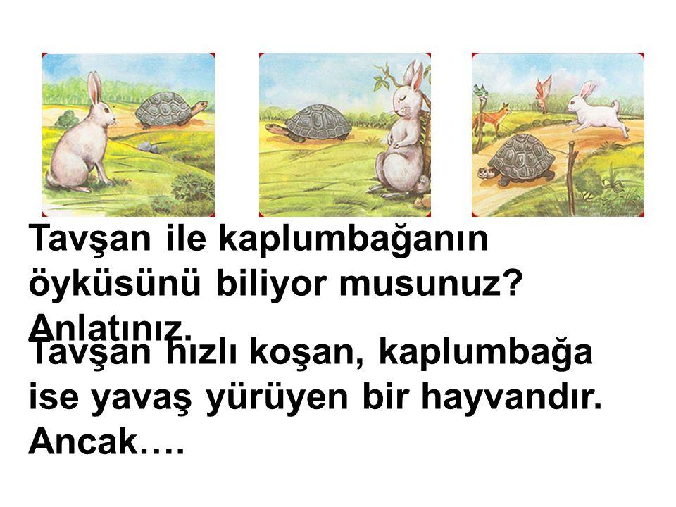 Tavşan ile kaplumbağanın öyküsünü biliyor musunuz.