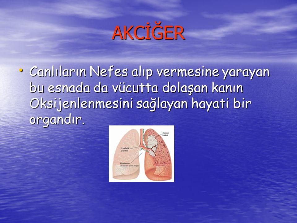 AKCİĞER Canlıların Nefes alıp vermesine yarayan bu esnada da vücutta dolaşan kanın Oksijenlenmesini sağlayan hayati bir organdır.