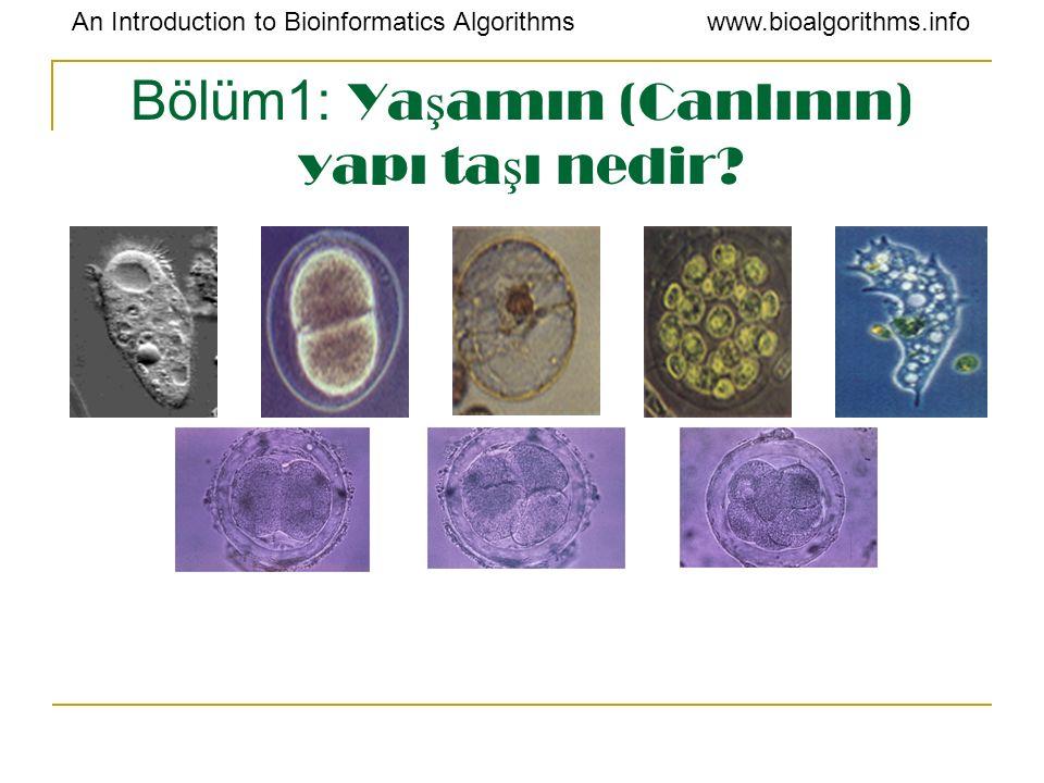 An Introduction to Bioinformatics Algorithmswww.bioalgorithms.info Bölüm1: Ya ş amın (Canlının) yapı ta ş ı nedir?