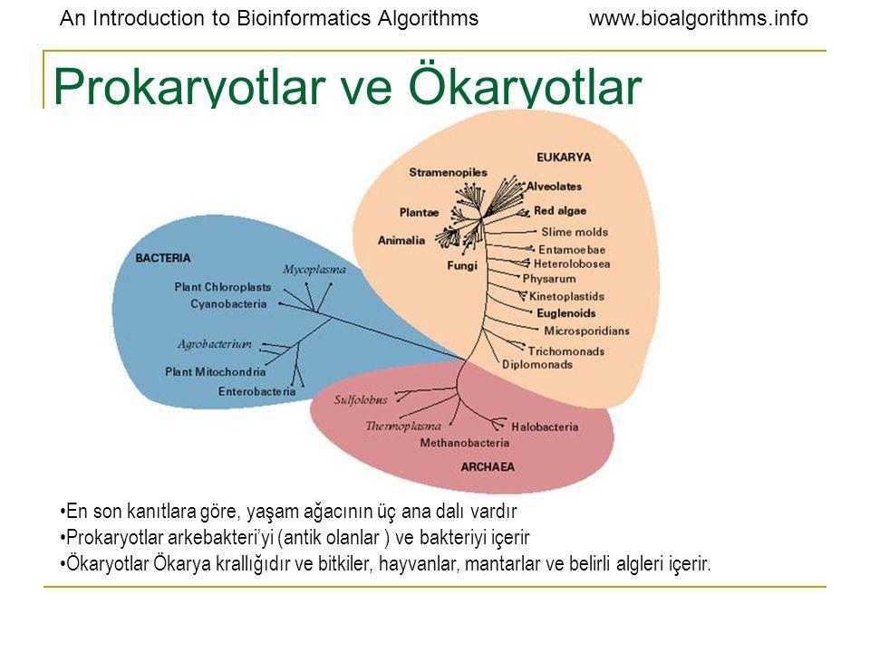 An Introduction to Bioinformatics Algorithmswww.bioalgorithms.info Prokaryotlar ve Ökaryotlar En son kanıtlara göre, yaşam ağacının üç ana dalı vardır