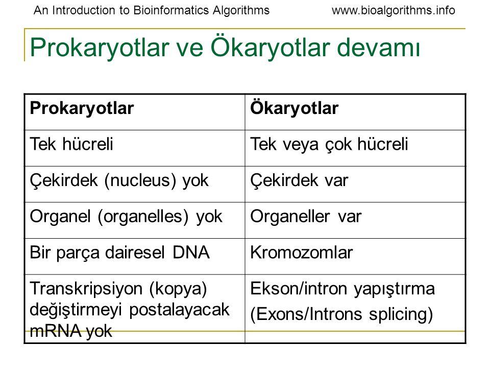 An Introduction to Bioinformatics Algorithmswww.bioalgorithms.info Prokaryotlar ve Ökaryotlar devamı ProkaryotlarÖkaryotlar Tek hücreliTek veya çok hü
