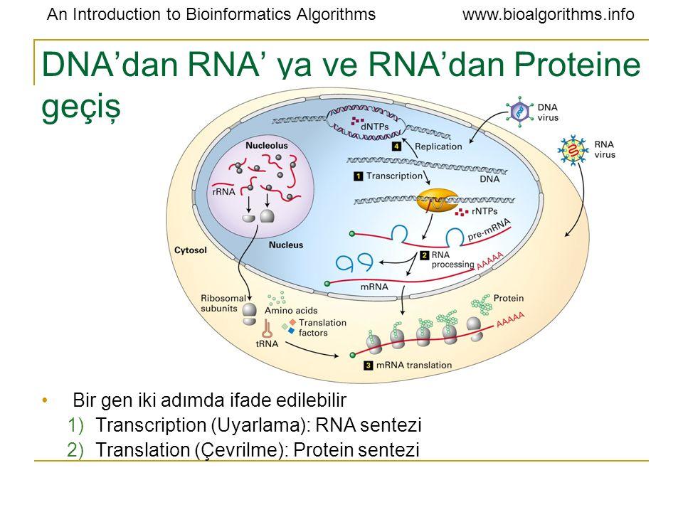 An Introduction to Bioinformatics Algorithmswww.bioalgorithms.info DNA'dan RNA' ya ve RNA'dan Proteine geçiş Bir gen iki adımda ifade edilebilir 1)Tra