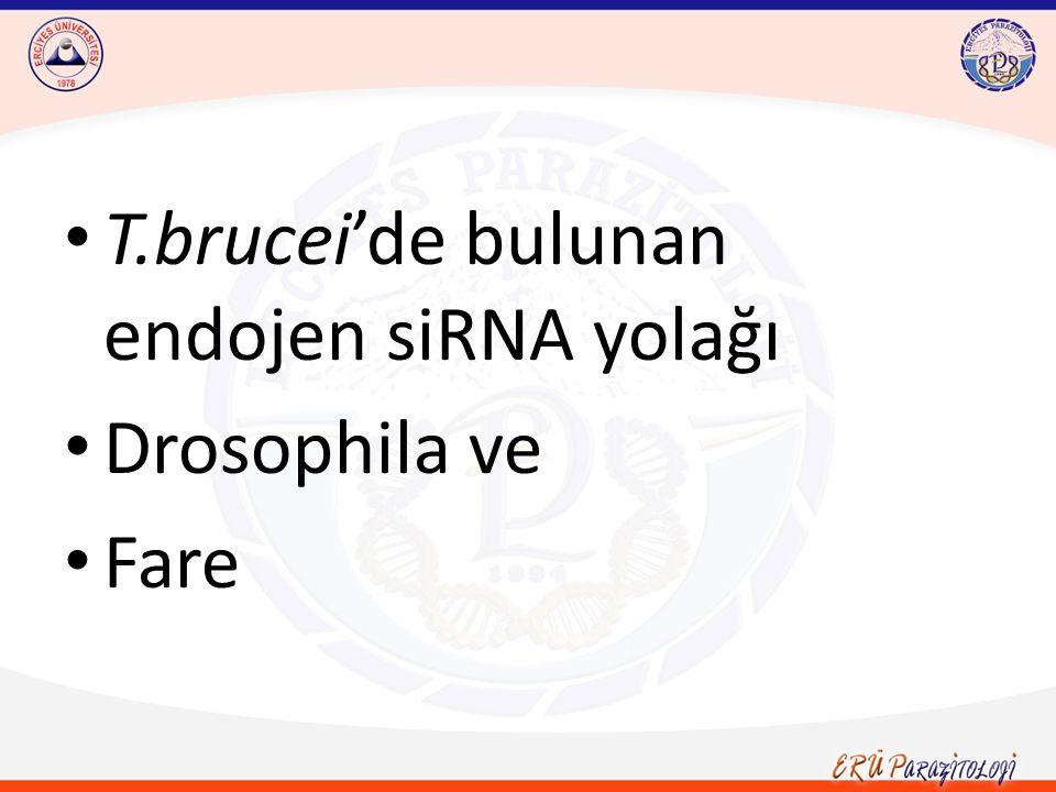 T.brucei'de bulunan endojen siRNA yolağı Drosophila ve Fare