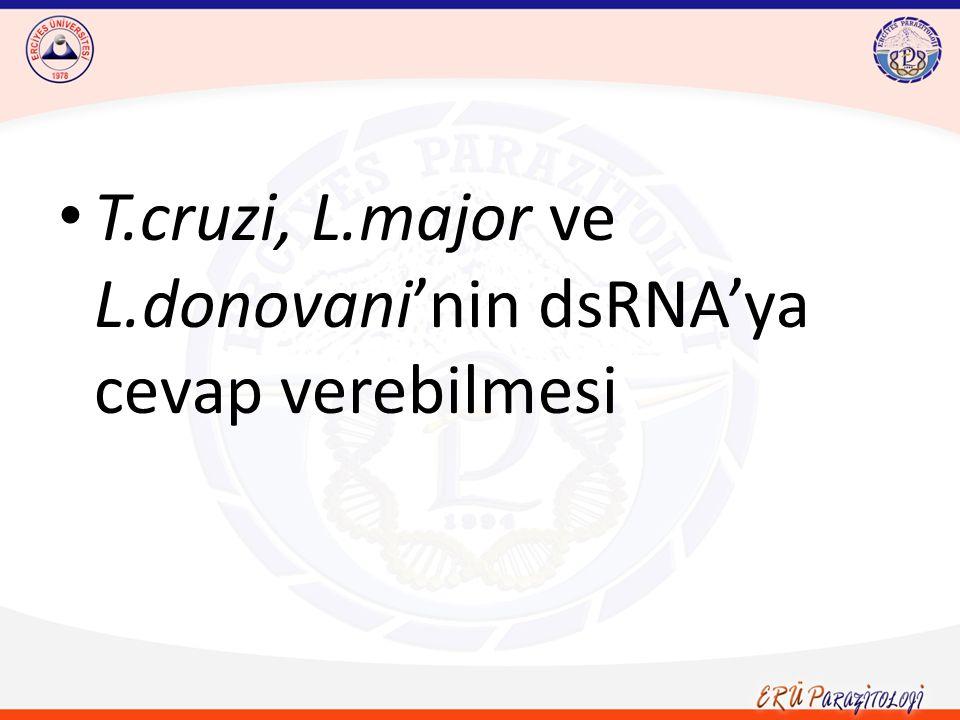 T.cruzi, L.major ve L.donovani'nin dsRNA'ya cevap verebilmesi