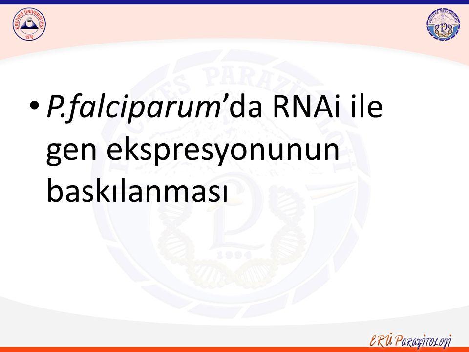 P.falciparum'da RNAi ile gen ekspresyonunun baskılanması