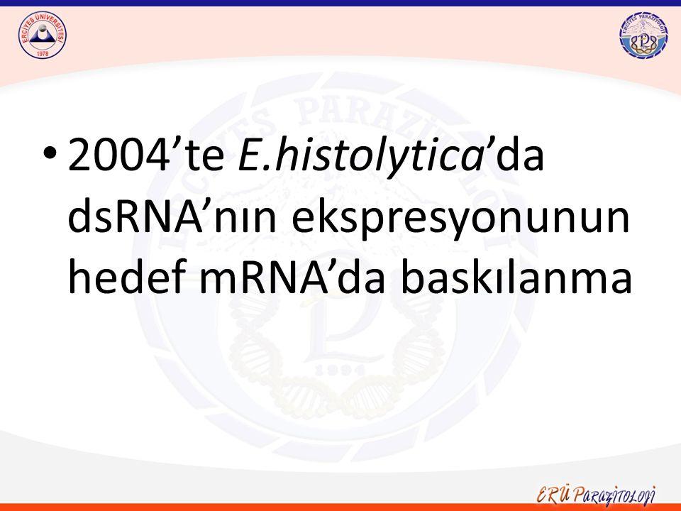2004'te E.histolytica'da dsRNA'nın ekspresyonunun hedef mRNA'da baskılanma