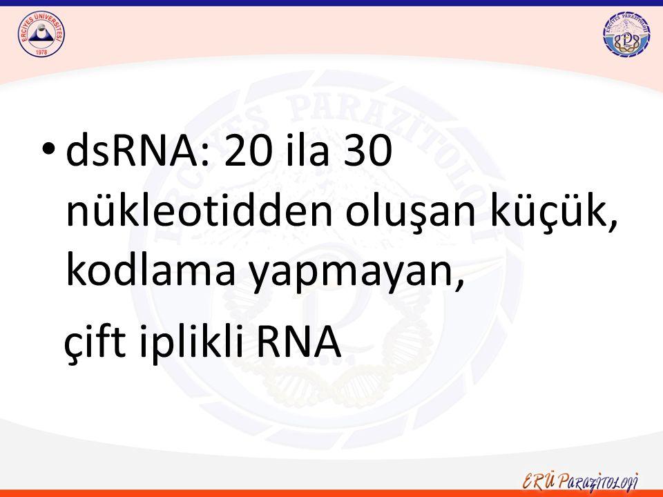 dsRNA: 20 ila 30 nükleotidden oluşan küçük, kodlama yapmayan, çift iplikli RNA