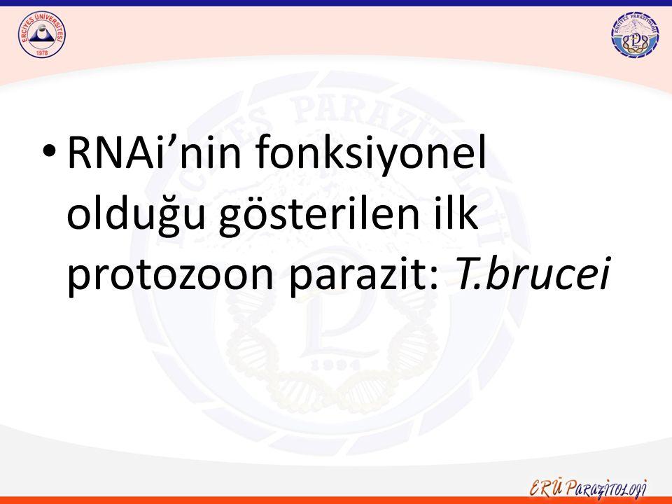 RNAi'nin fonksiyonel olduğu gösterilen ilk protozoon parazit: T.brucei