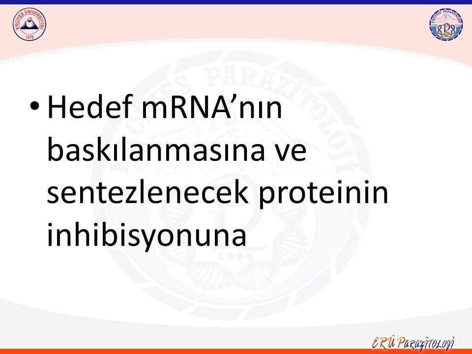 T.brucei'de RNAi yolağının iki kolu mevcuttur.