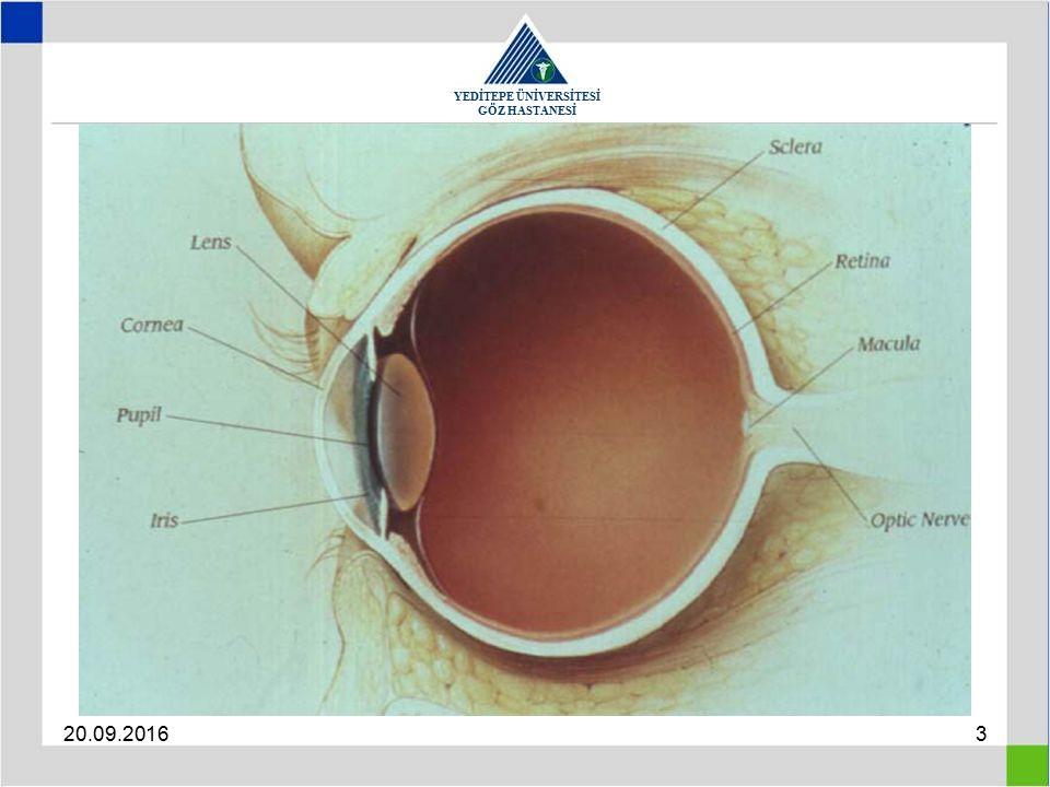YEDİTEPE ÜNİVERSİTESİ GÖZ HASTANESİ 20.09.201624 Correction Myopia : Concave lenses Spectacles