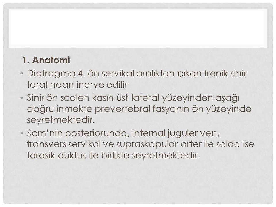 1. Anatomi Diafragma 4.