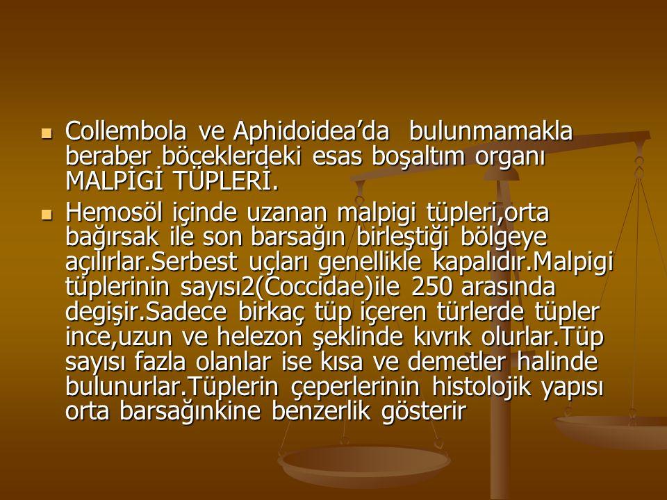 Collembola ve Aphidoidea'da bulunmamakla beraber böceklerdeki esas boşaltım organı MALPİGİ TÜPLERİ.