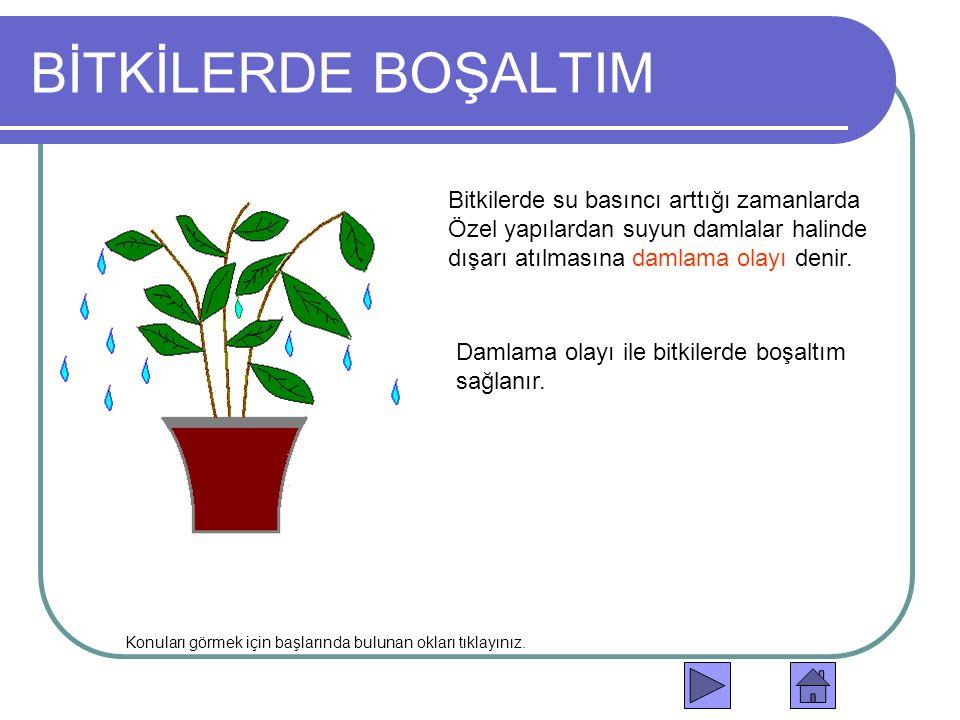 BİTKİLERDE BOŞALTIM Bitkilerde su basıncı arttığı zamanlarda Özel yapılardan suyun damlalar halinde dışarı atılmasına damlama olayı denir.
