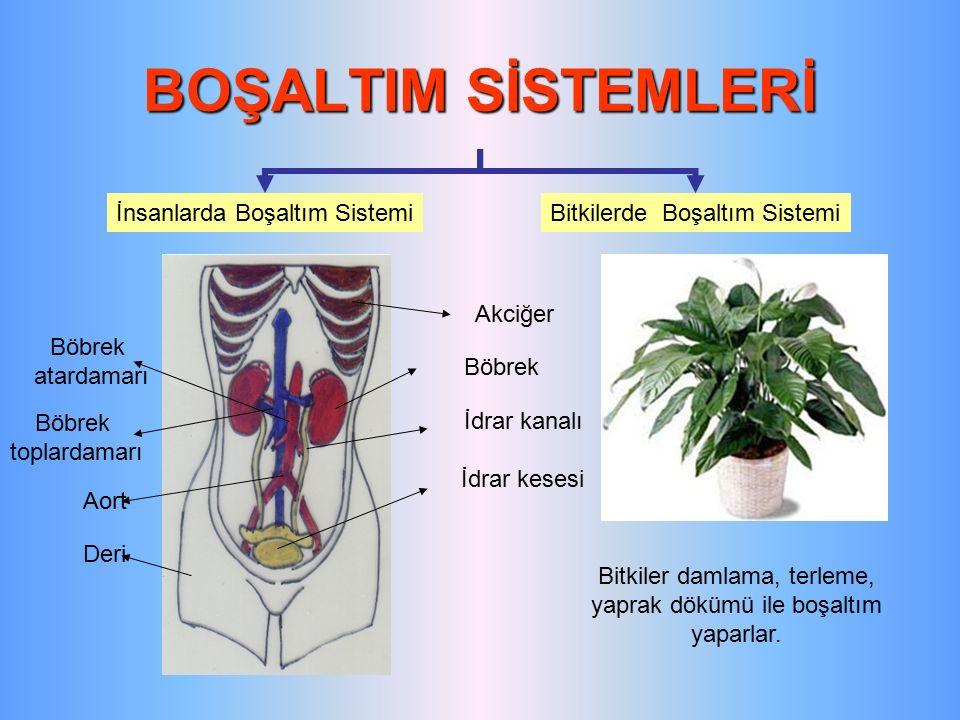 BOŞALTIM SİSTEMLERİ İnsanlarda Boşaltım SistemiBitkilerde Boşaltım Sistemi Bitkiler damlama, terleme, yaprak dökümü ile boşaltım yaparlar. Akciğer Böb