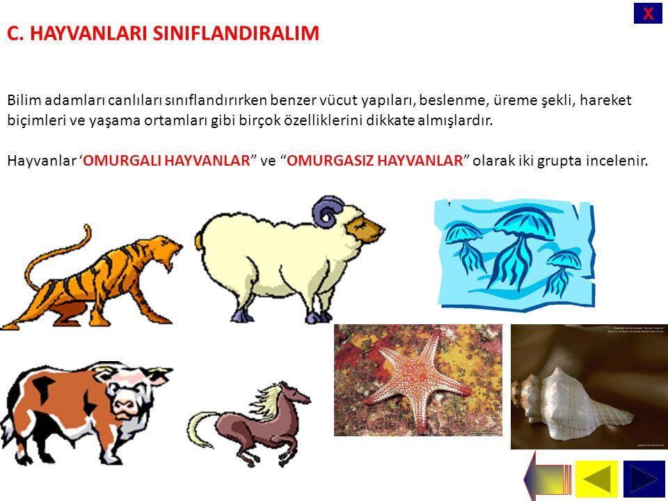 X C. HAYVANLARI SINIFLANDIRALIM Bilim adamları canlıları sınıflandırırken benzer vücut yapıları, beslenme, üreme şekli, hareket biçimleri ve yaşama or