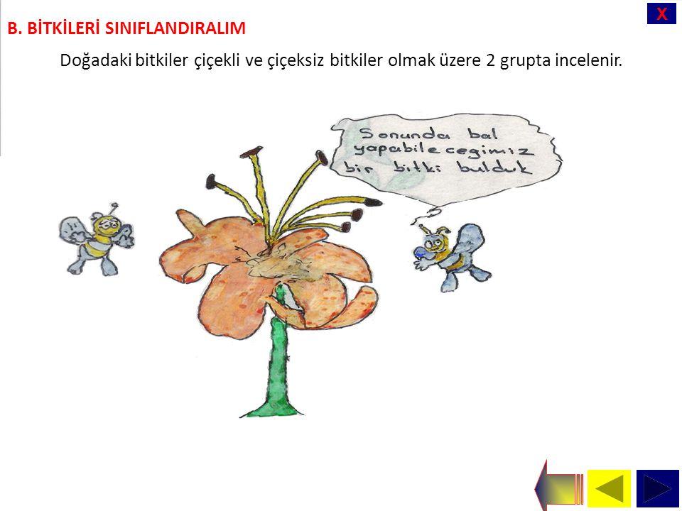 X Doğadaki bitkiler çiçekli ve çiçeksiz bitkiler olmak üzere 2 grupta incelenir.