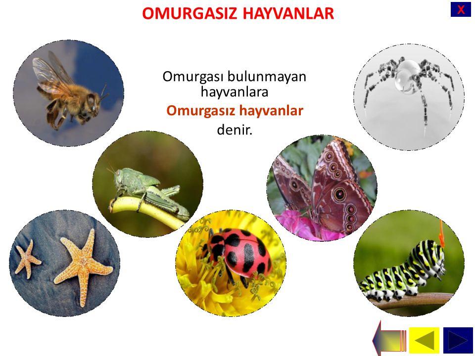 X OMURGASIZ HAYVANLAR Omurgası bulunmayan hayvanlara Omurgasız hayvanlar denir.