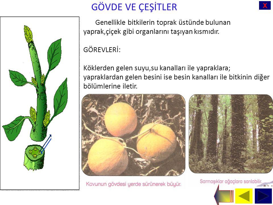 X GÖVDE VE ÇEŞİTLER Genellikle bitkilerin toprak üstünde bulunan yaprak,çiçek gibi organlarını taşıyan kısmıdır.