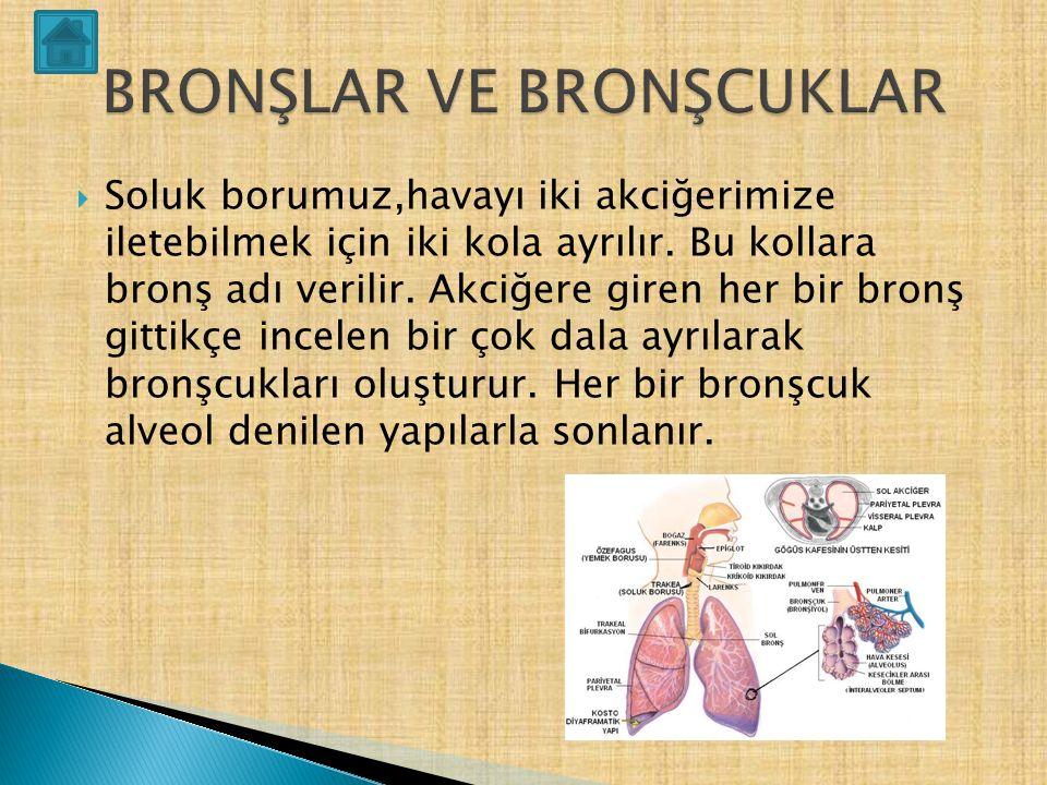  Göğüs boşluğunda, bir sağda diğeri solda olmak üzere çift akciğer bulunur.