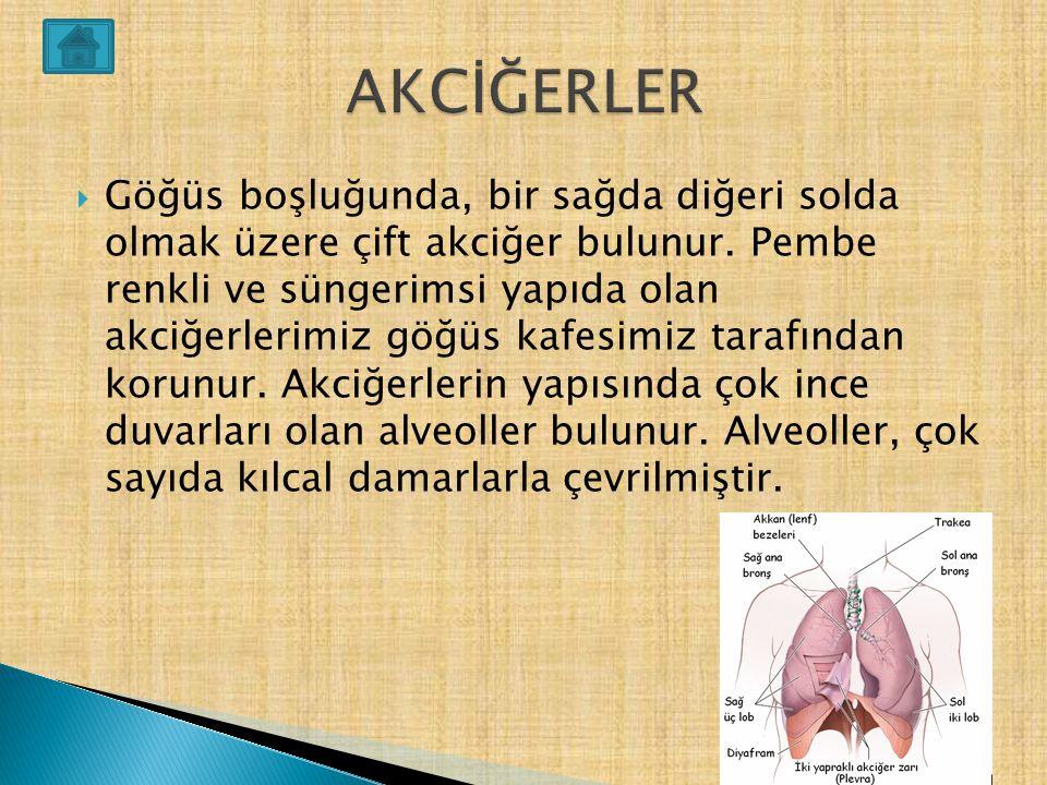  Soluk alıp vermede diyafram kası, kaburgalar arası kaslar ve akciğerlerimiz birlikte çalışır.