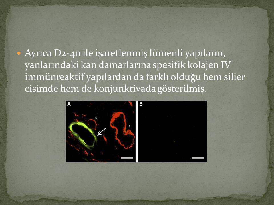 Ayrıca D2-40 ile işaretlenmiş lümenli yapıların, yanlarındaki kan damarlarına spesifik kolajen IV immünreaktif yapılardan da farklı olduğu hem silier cisimde hem de konjunktivada gösterilmiş.