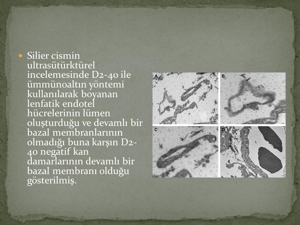 Silier cismin ultrasütürktürel incelemesinde D2-40 ile ümmünoaltın yöntemi kullanılarak boyanan lenfatik endotel hücrelerinin lümen oluşturduğu ve devamlı bir bazal membranlarının olmadığı buna karşın D2- 40 negatif kan damarlarının devamlı bir bazal membranı olduğu gösterilmiş.