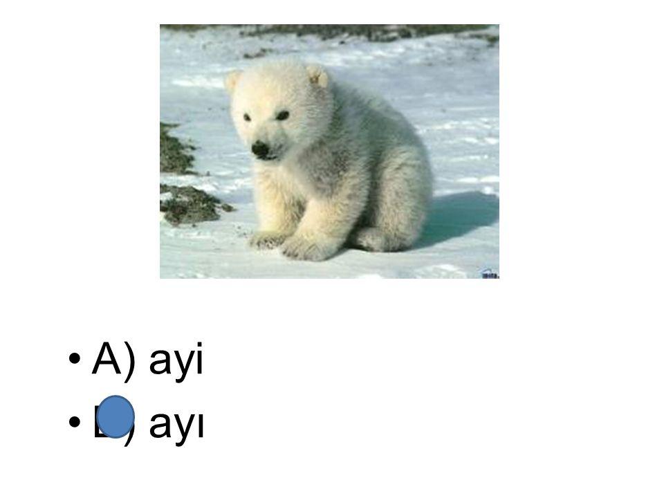 A) ayi B) ayı