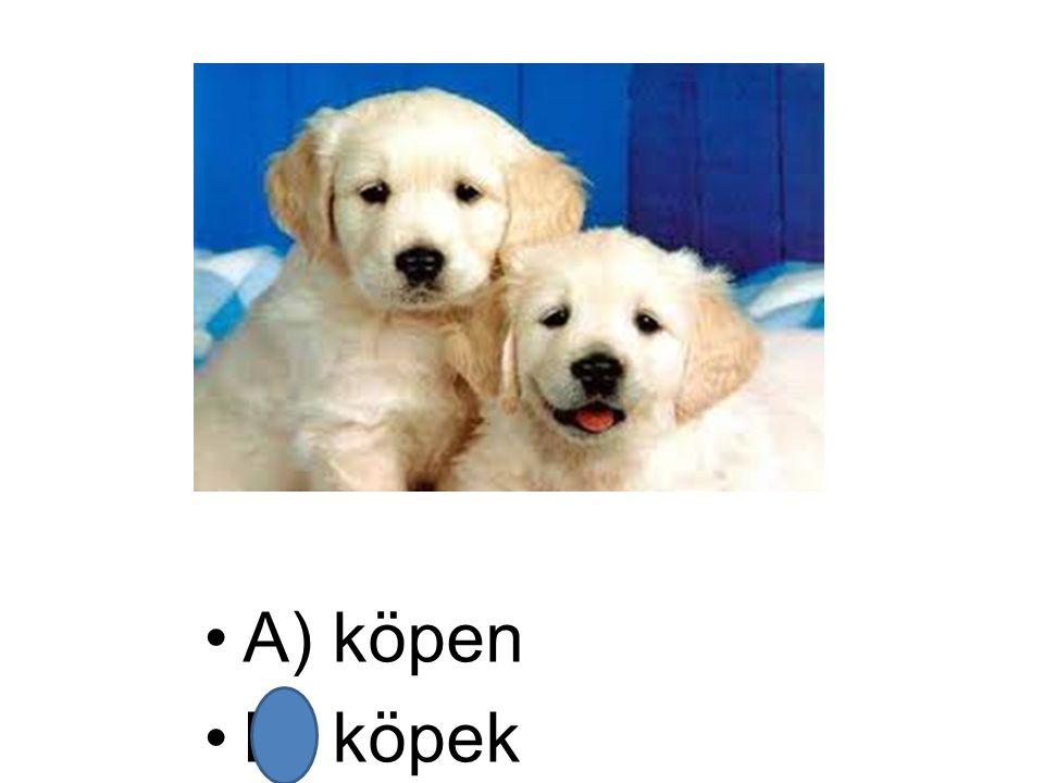 A) köpen B) köpek